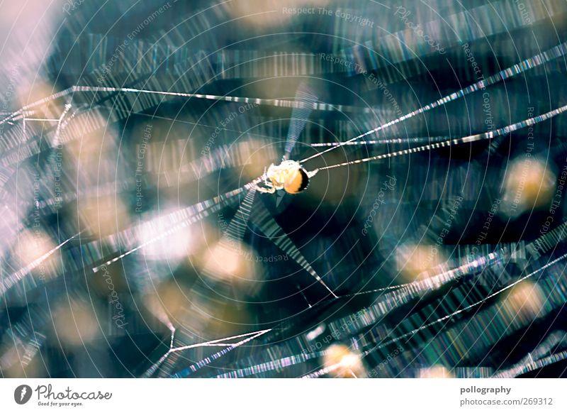 Das große Krabbeln (III) Frühling Sommer Schönes Wetter Tier Wildtier Spinne 1 Tiergruppe Tierjunges krabbeln laufen dünn Ekel klein blau gelb gold Angst