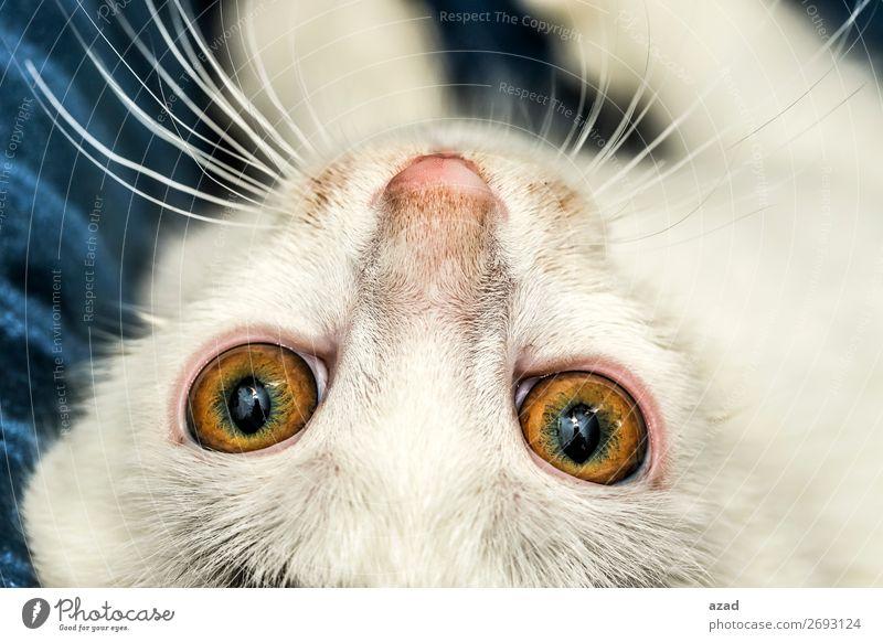 Katzenaugen Haustier 1 Tier Fernsehen schauen Auge zuschauen Mikro Farbfoto Nahaufnahme Makroaufnahme Nacht Blitzlichtaufnahme