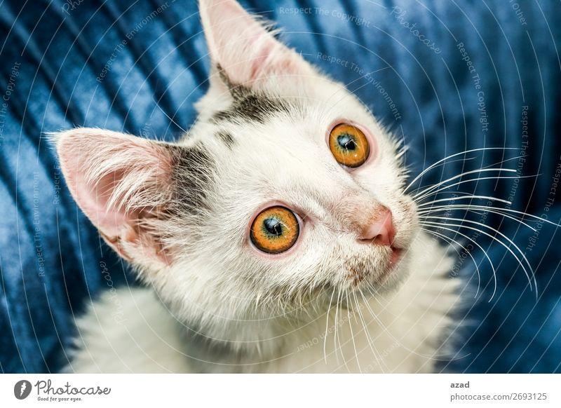 Auge Angst Haustier