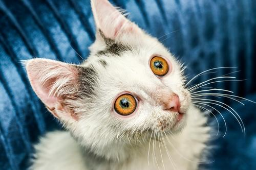 Katze Haustier Angst Auge zuschauen Farbfoto Makroaufnahme Blitzlichtaufnahme Blick nach oben