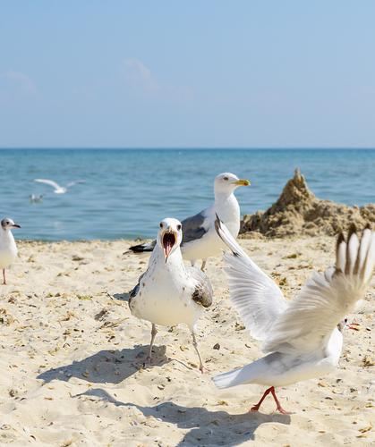 Himmel Ferien & Urlaub & Reisen Natur Sommer blau weiß Landschaft Meer Tier Strand schwarz Umwelt natürlich Küste Tourismus Freiheit