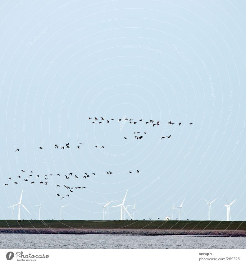 Zugvögel Graugans Gans Hausgans Windkraftanlage Energie Damm Meer wadden sea Vogel Schwarm birdwatching Wolken fliegen Formation Migration Zugvogel Bewegung