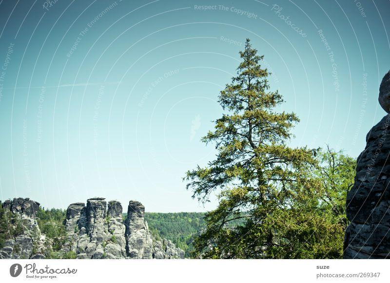 Grüner Star Ferne Freiheit Berge u. Gebirge Umwelt Natur Landschaft Pflanze Himmel Wolkenloser Himmel Klima Schönes Wetter Baum Felsen authentisch wild grün