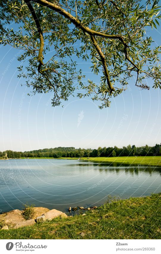 platzerl zum chillen Ferien & Urlaub & Reisen Sommer Sommerurlaub Natur Wasser Himmel Baum Wiese Seeufer Erholung ästhetisch einfach nachhaltig blau grün ruhig