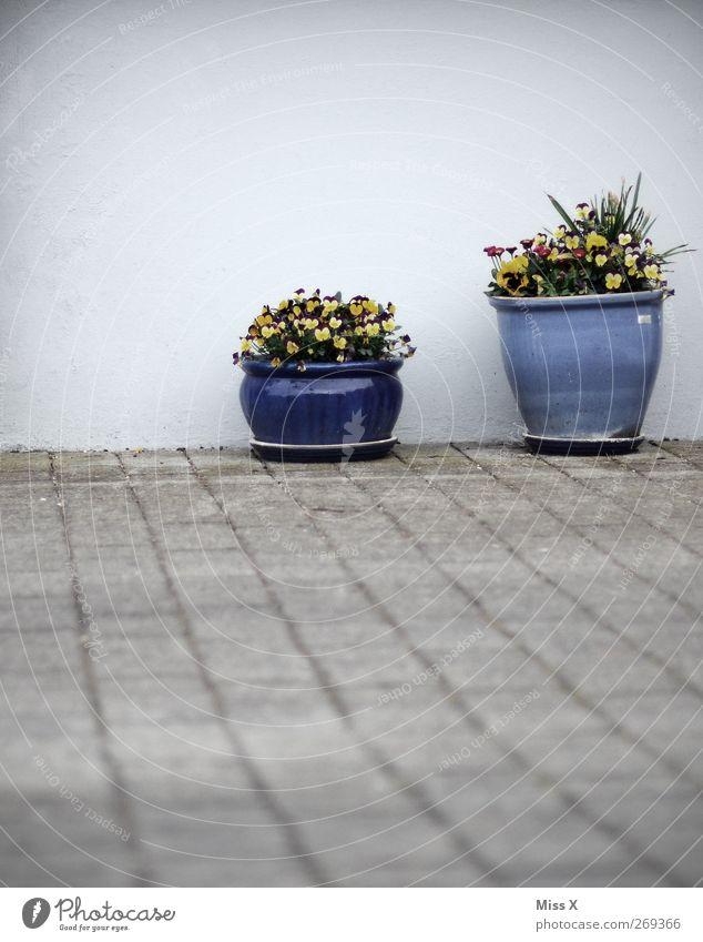 Wanddeko I Blume Blatt Blüte Topfpflanze Mauer Terrasse Blühend Duft Dekoration & Verzierung Blumentopf blau Stiefmütterchen Farbfoto Außenaufnahme Menschenleer