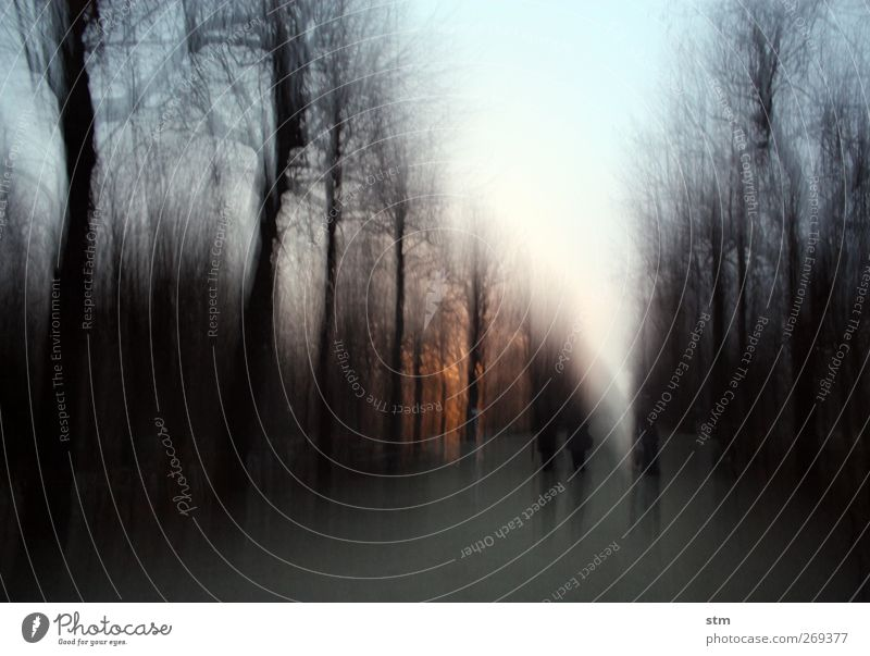katerspaziergang spatzieren gehen Ausflug Winter Mensch Menschengruppe Natur Pflanze Himmel Wolkenloser Himmel Sonnenaufgang Sonnenuntergang Schönes Wetter Baum