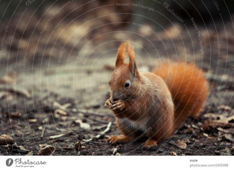 Verfressen Natur Pflanze rot Landschaft Tier Umwelt Herbst klein natürlich braun Wildtier authentisch niedlich Fell tierisch Fressen