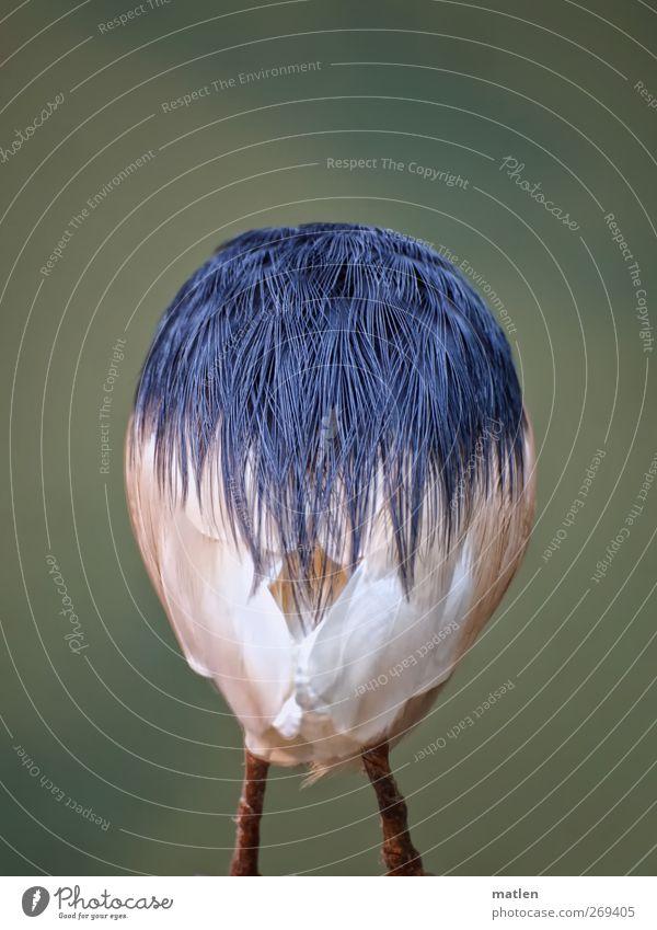 Frohe Ostern Tier Vogel 1 blau grün weiß Beine Metallfeder Ei Rücken Schwanz kopflos Gedeckte Farben Außenaufnahme Menschenleer Textfreiraum oben Tag