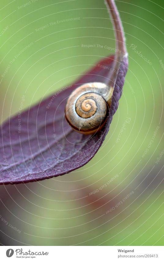 Schnick-schnack-schnuck Natur alt grün Blatt Tier Leben Geschwindigkeit authentisch schlafen Perspektive planen Pause rund Wellness violett positiv