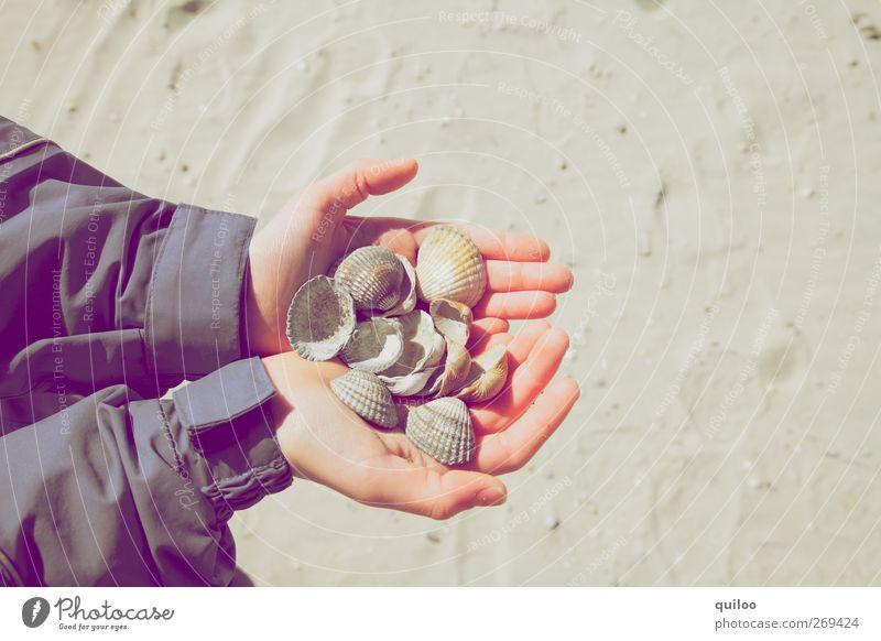 Muschelsuche Kinderspiel Ferien & Urlaub & Reisen Ausflug Sommer Sommerurlaub Strand Arme Hand Sand Küste Spielen tragen Erfolg Glück klein Freude Leidenschaft