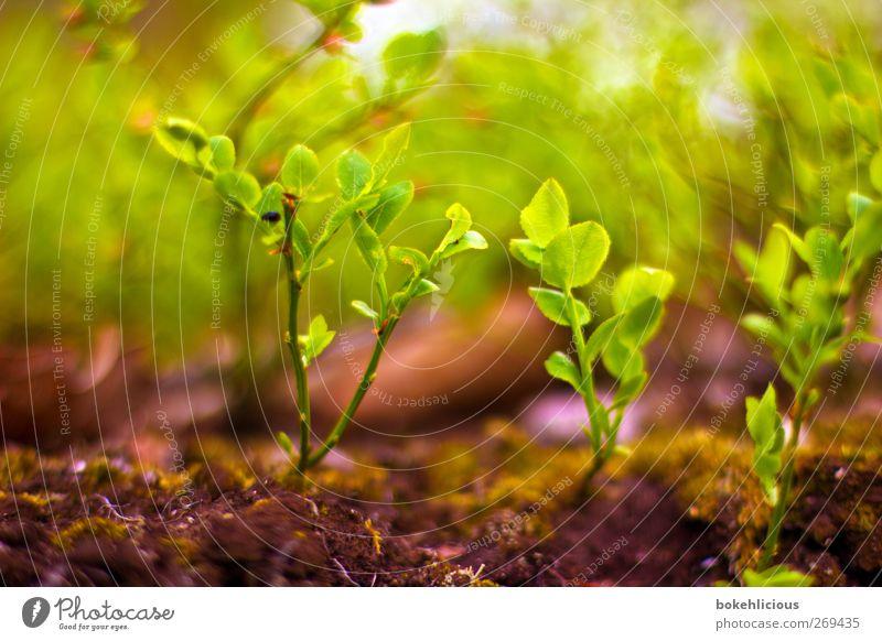 simple nature 2 Natur grün rot Pflanze Wald Erholung Umwelt Leben Gras Erde Kraft violett Grünpflanze