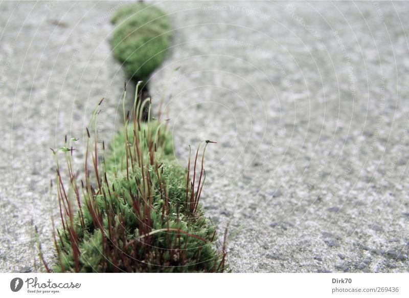 Ohne Moos nix los - Biotope Balkonesiens weiß grün Stadt rot Pflanze Blatt schwarz Leben Wege & Pfade grau Stein Garten Beton Wachstum Perspektive Idylle