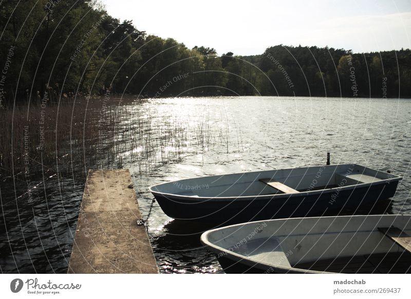 Allem Anfang wohnt ein Zauber inne Wasser Ferien & Urlaub & Reisen Sommer Einsamkeit ruhig Erholung Landschaft Holz Freiheit träumen Stimmung Zufriedenheit