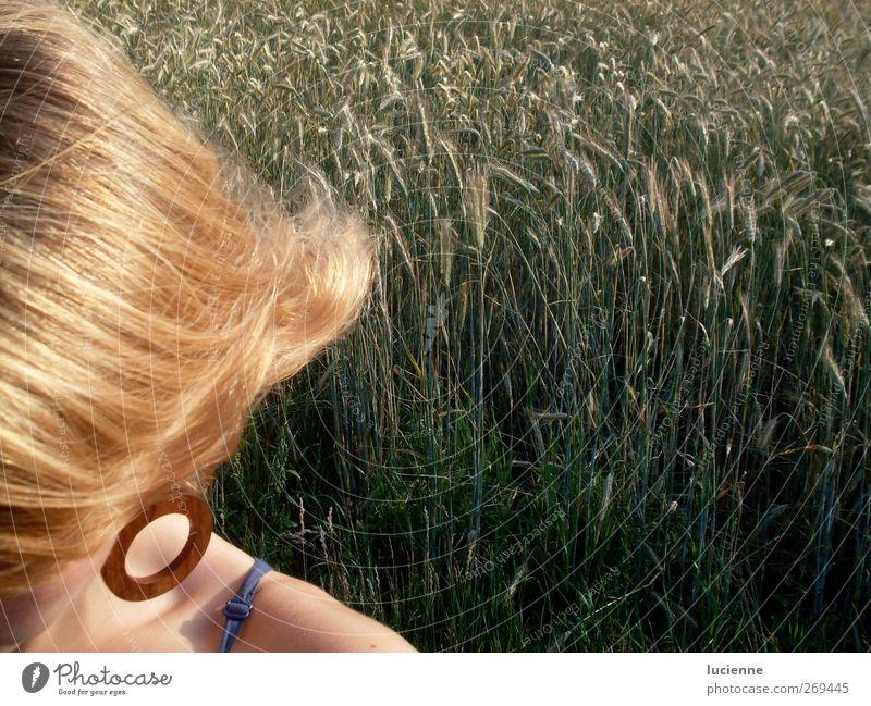 Roggenblond Mensch Jugendliche blau grün schön feminin braun Zufriedenheit blond Junge Frau Feld gold natürlich Schönes Wetter genießen Lebensfreude
