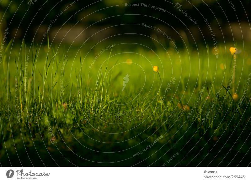 Wiese Natur Frühling Schönes Wetter Blume Gras Garten Park Wachstum Freundlichkeit Kitsch grün Zufriedenheit ruhig Design Erholung Freizeit & Hobby Idylle