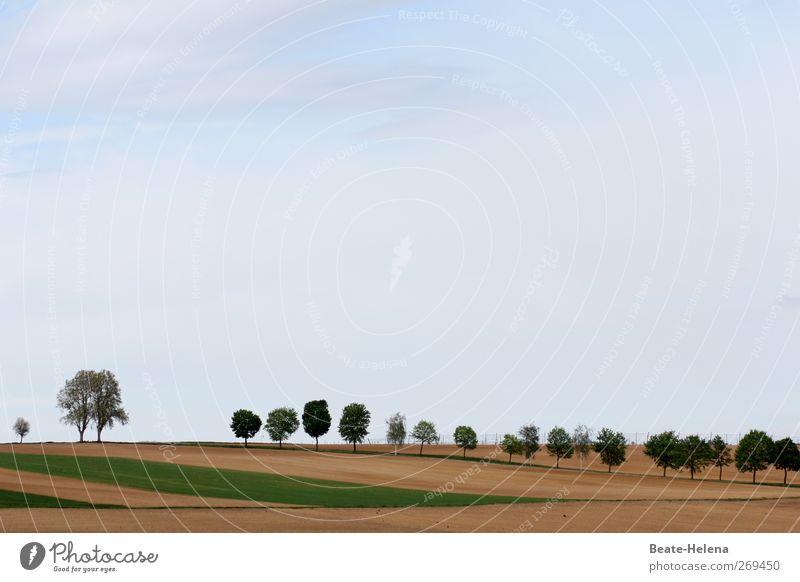 Hinten anstellen bitte Himmel Natur blau grün Ferien & Urlaub & Reisen schön Baum Pflanze Sonne Landschaft Frühling Sand Luft Stimmung braun Erde