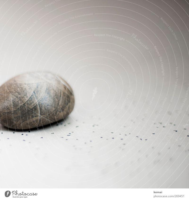 Mein Stein Punkt liegen rund grau versteinert Fossilien Bodenbelag Linoleum Farbfoto Gedeckte Farben Innenaufnahme Nahaufnahme Detailaufnahme Menschenleer