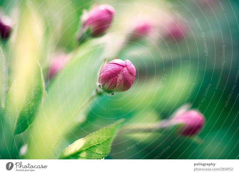 growing Umwelt Natur Pflanze Sonnenlicht Frühling Sommer Schönes Wetter Gras Blatt Blüte Grünpflanze Blühend Wachstum gelb grün violett rosa Frühlingsgefühle