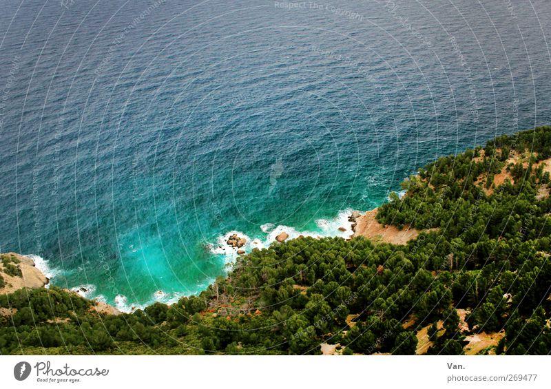 natürliche Kurven Ferien & Urlaub & Reisen Natur Landschaft Pflanze Sand Wasser Sommer Baum Wald Felsen Küste Bucht Meer Mittelmeer Mallorca Stein frisch Wärme