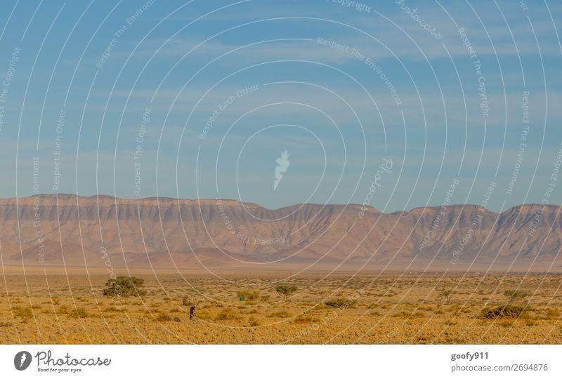 Einsamer Oryx Ferien & Urlaub & Reisen Tourismus Ausflug Abenteuer Ferne Freiheit Safari Umwelt Natur Landschaft Erde Sand Himmel Wärme Dürre Hügel Felsen