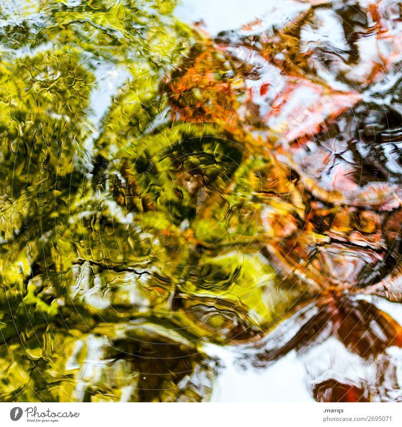 Wandel elegant Stil Natur Wasser Pflanze Baum Blatt Teich ästhetisch außergewöhnlich verrückt grün orange schwarz Farbe Surrealismus Wandel & Veränderung
