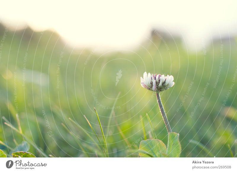 Last Man Standing Himmel Natur weiß grün Pflanze Sommer Blume Blatt schwarz Erholung gelb Landschaft Wiese Gras Frühling Garten