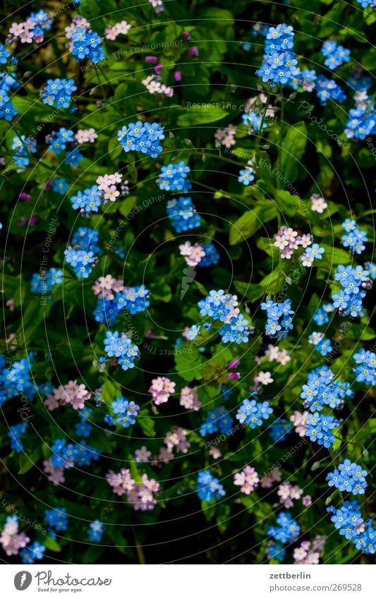 Blümchen Lifestyle Freizeit & Hobby Garten Umwelt Natur Landschaft Pflanze Frühling Sommer Klima Klimawandel Wetter Schönes Wetter Blume Blatt Blüte Park Wiese