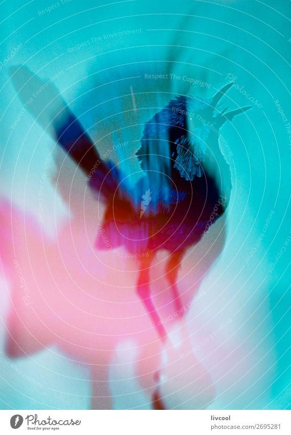 prächtiges Märchenschlüpfer, Australien schön Leben Freiheit Museum Tier Wildtier Vogel 1 fliegen träumen authentisch Coolness frei blau rot weiß Gefühle