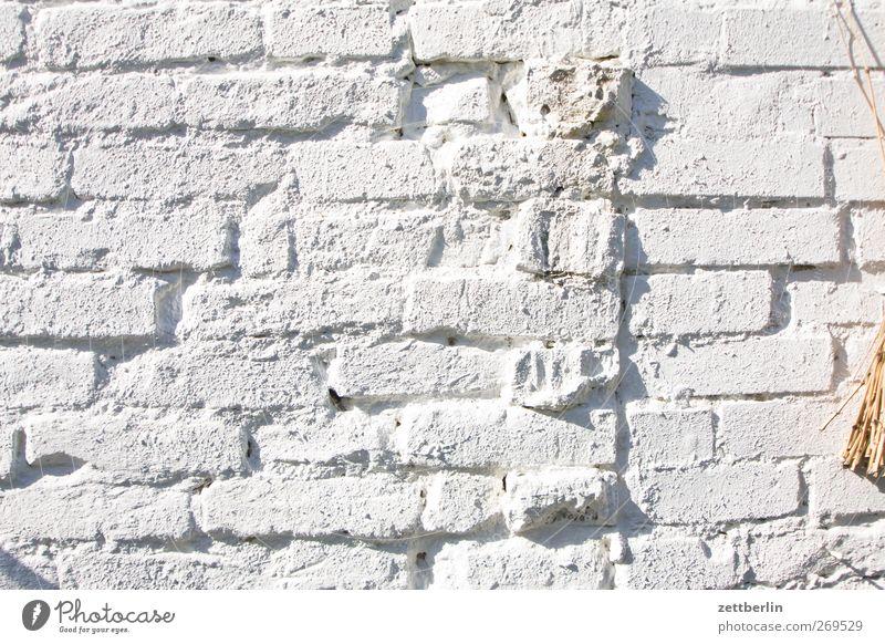 Textfreiraum Sommer Haus Wand Architektur Frühling Garten Mauer Gebäude hell Innenarchitektur Wohnung Fassade Wachstum Dekoration & Verzierung Bauwerk Fuge