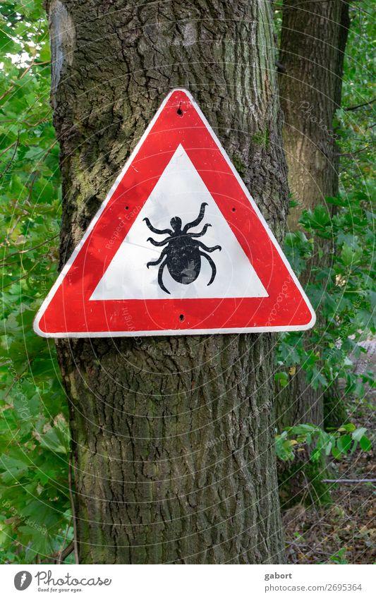 tick insect warning sign in forest Natur wandern grün rot lyme Tick disease parasite ixodes borreliosis ricinus danger arachnid arthropod pest infection