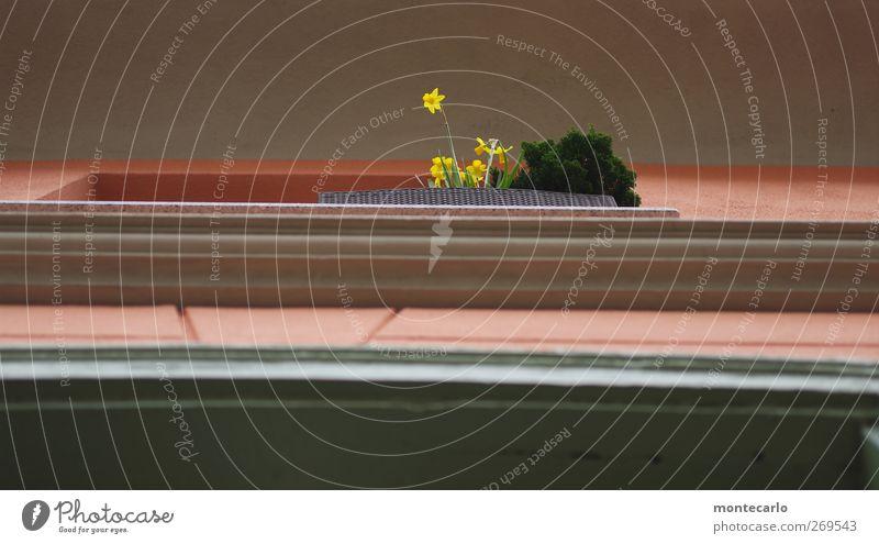 Wasn los da unten ? Umwelt Natur Pflanze Frühling schlechtes Wetter Regen Blume Gras Blatt Blüte Grünpflanze Wildpflanze Straße Fußgängerzone Dorf Altstadt