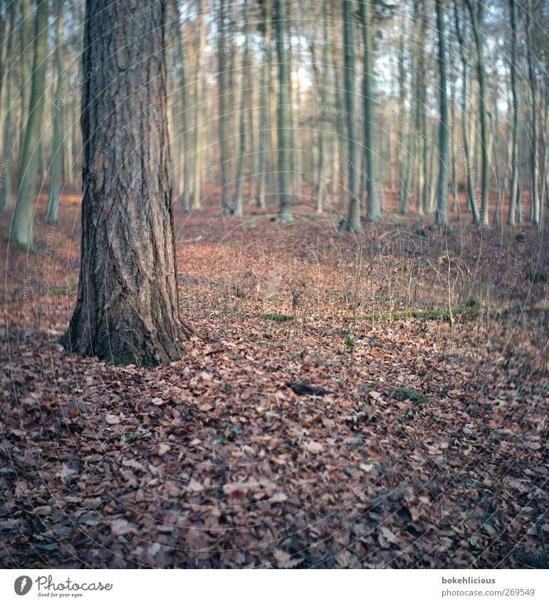 Baum Natur Pflanze Tier Erde Grünpflanze Wildpflanze braun Umwelt Unschärfe ruhig einzeln Baumstamm analog retro trist Farbfoto Außenaufnahme
