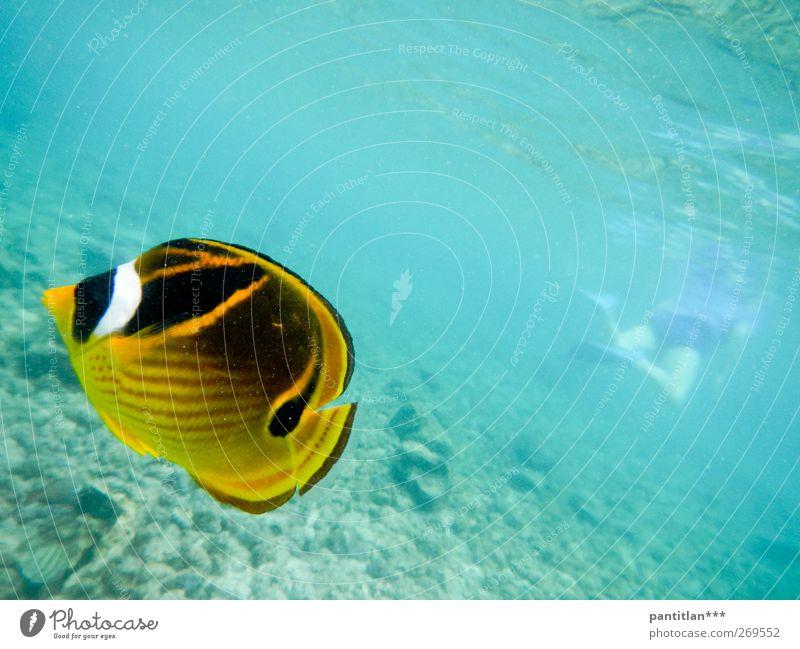 Mi Cuate El Pez Wellness Schwimmen & Baden Ferien & Urlaub & Reisen Meer Schnorcheln tauchen Körper Rücken 1 Mensch Natur Tier Korallenriff Pazifik Wildtier