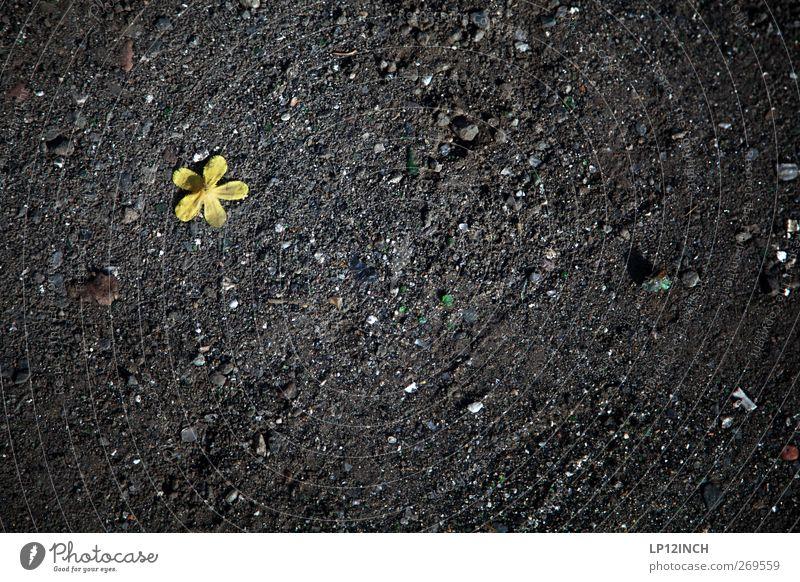 tRaum auf dem Wasser III Umwelt Natur Landschaft Pflanze Erde Sand Blüte Stein grau grün schwarz Einsamkeit Trennung verlieren gefallen Bodenbelag Blatt