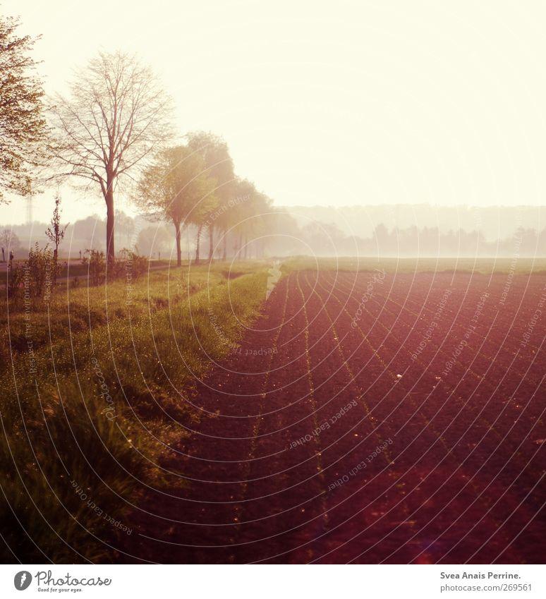 . Umwelt Natur Sonnenaufgang Sonnenuntergang Sonnenlicht Frühling Schönes Wetter Nebel Baum Wiese Feld Freundlichkeit natürlich Ackerbau Ackerboden Farbfoto