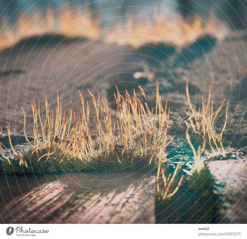 Kunst der Fuge Pflanze Herbst Umwelt klein Schönes Wetter nah Moos Wildpflanze