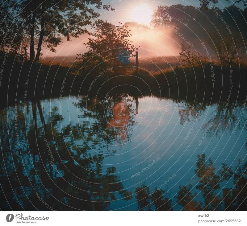 Kurz vor 6 Umwelt Natur Landschaft Pflanze Herbst Schönes Wetter Nebel Baum Gras Sträucher Bach leuchten glänzend trösten geduldig ruhig Sehnsucht Fernweh