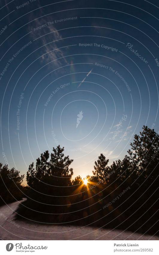 The Greatest Light is the Greatest Shade Umwelt Natur Landschaft Pflanze Urelemente Sand Luft Sonne Sonnenaufgang Sonnenuntergang Sonnenlicht Sommer