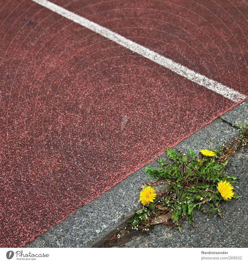 Kräuterbeet Natur grün Pflanze rot gelb Wege & Pfade grau Blüte Linie Kraft Laufsport Streifen Kreativität Blühend Löwenzahn graphisch