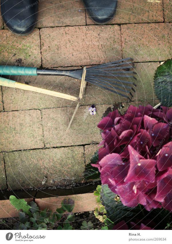 GartenLust Mensch Pflanze Erholung Leben Frühling Blüte Arbeit & Erwerbstätigkeit Schuhe natürlich Beginn authentisch beobachten Schönes Wetter violett Blühend