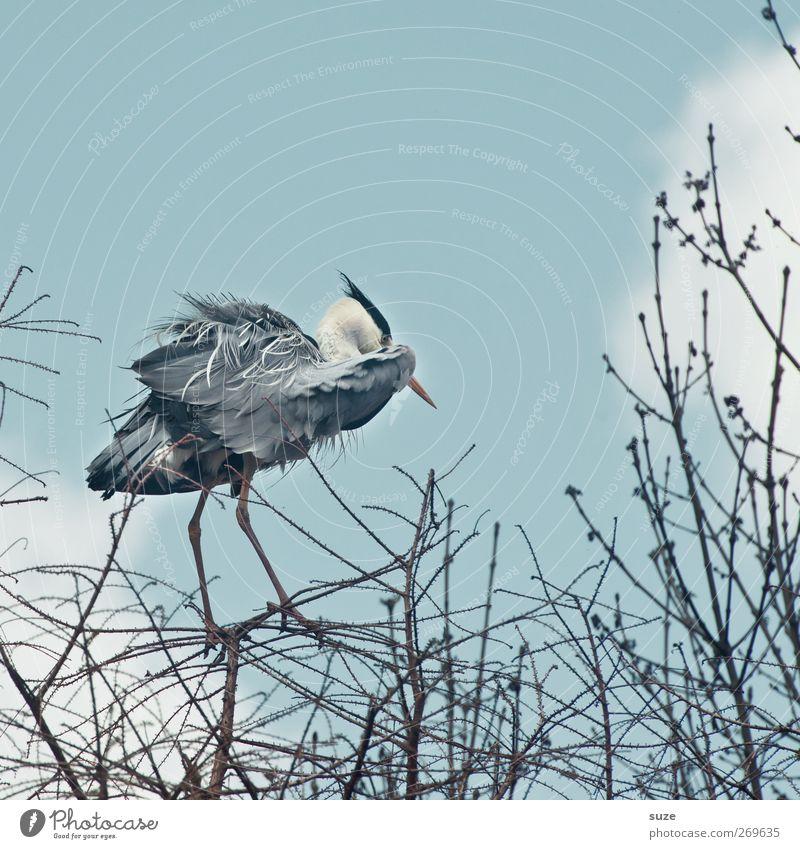 Es ist zum Reihern Himmel Sommer Tier Wolken Umwelt Luft Vogel hell Wind Wildtier natürlich stehen Urelemente Schönes Wetter Ast dünn