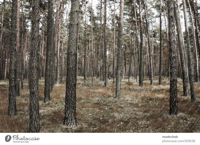 Waldemar Stumpfmann Natur Sommer Baum Landschaft Wald Kraft Wachstum Ordnung ästhetisch Baumstamm nachhaltig Birke Waldboden Strukturen & Formen Birkenwald