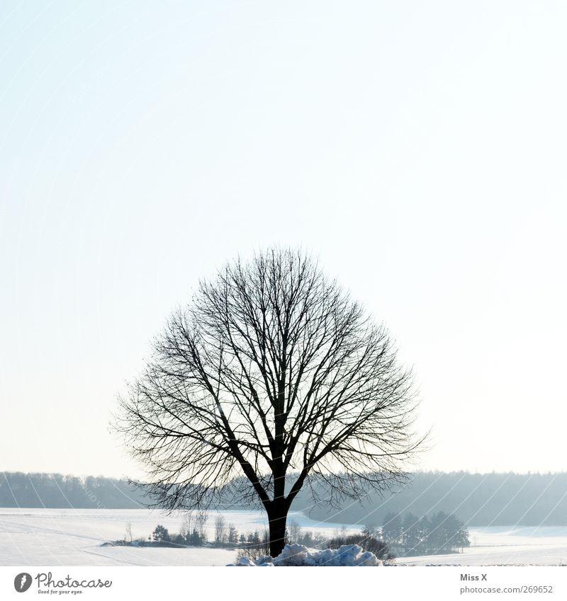 out of season III Natur weiß Baum Winter Einsamkeit Landschaft kalt Schnee Eis Frost Ast Zweige u. Äste