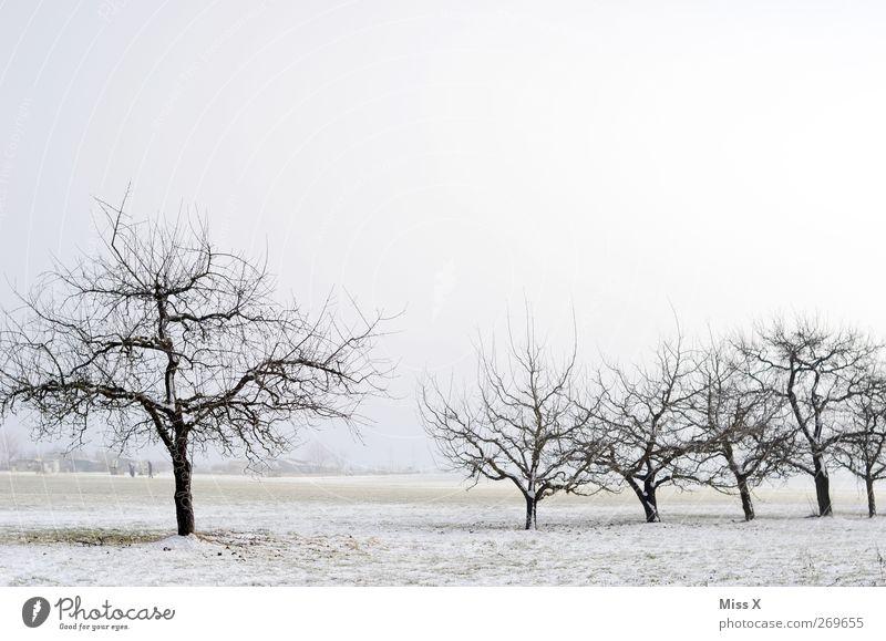 out of season II Natur Landschaft Winter Eis Frost Schnee kalt trist weiß Streuobstwiese Wintertag Farbfoto Gedeckte Farben Menschenleer Textfreiraum oben