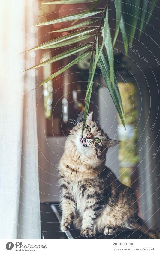 Junge Katze isst die Zimmerpflanzen Design Häusliches Leben Wohnzimmer Pflanze Haustier Essen Lifestyle Wohnung Tier Unsinn lustig Sibirische Katze Farbfoto
