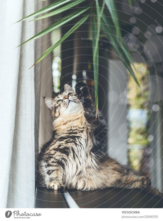 Junge Katze spielt mit Zimmerpflanze Lifestyle Häusliches Leben Tier Haustier 1 Design Spielen lustig Sibirische Katze Rassekatze Wohnung Farbfoto Innenaufnahme