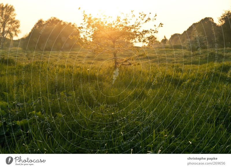 Märchenhaftes Bäumchen Umwelt Natur Landschaft Pflanze Sonne Sonnenaufgang Sonnenuntergang Sonnenlicht Frühling Sommer Herbst Schönes Wetter Baum Wiese Feld