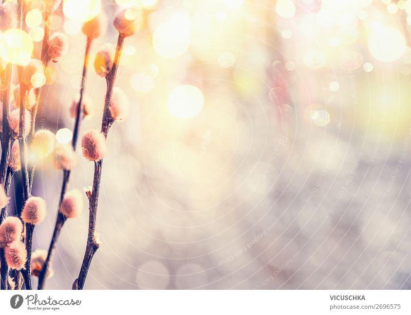 Weidenkätzchen in Sonnenlicht Natur Pflanze Hintergrundbild Lifestyle gelb Blüte Frühling Gefühle Garten Design Park Schönes Wetter Ostern Blumenstrauß April