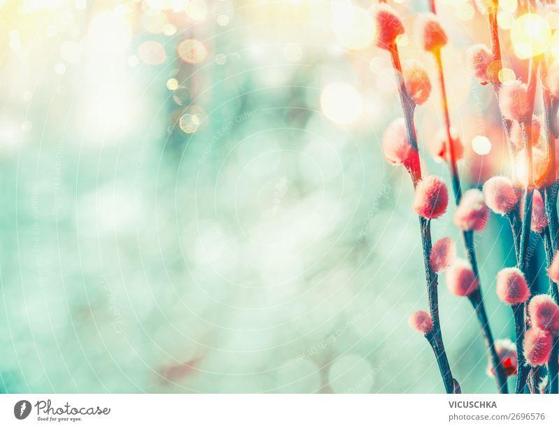 Frühling Nature Hintergrund mit Weidenkätzchen Design Garten Pflanze Sonnenlicht Schönes Wetter Wildpflanze Park Gefühle Freude Frühlingsgefühle Hintergrundbild
