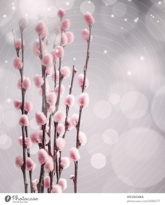 Rosa Weidenkätzchen an Bokeh, Frühling Lifestyle Design Dekoration & Verzierung Natur Pflanze Blüte Blumenstrauß trendy weich Hintergrundbild April März